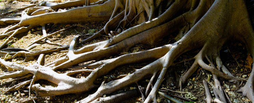 What To Do When Your Tree's Roots Are Destroying The Sidewalk