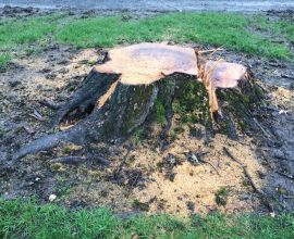 Stump Grinding Frees Up Space in Your Yard