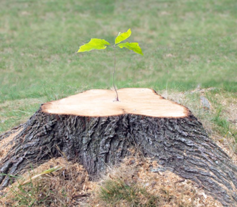 5 Good Reasons To Remove A Tree Stump