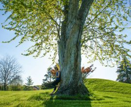 When to Call an Arborist Instead of a Landscaper