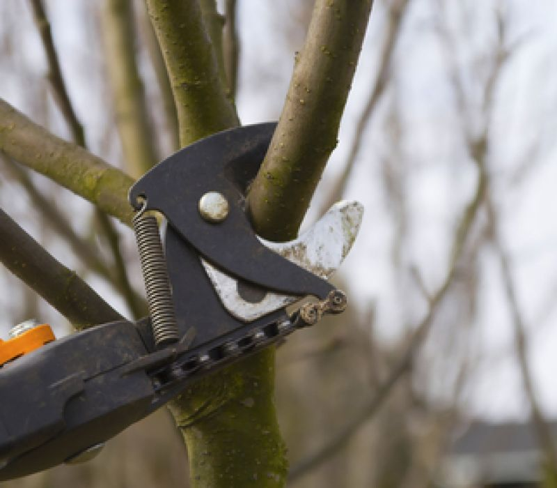 When is the right time to prune trees?