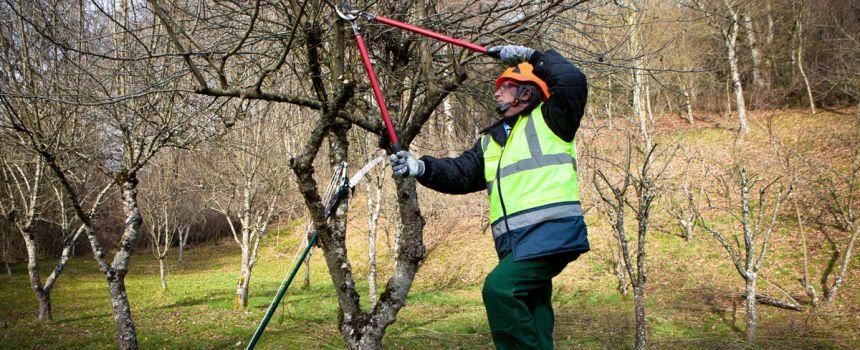 Should I Prune My Trees in Winter?