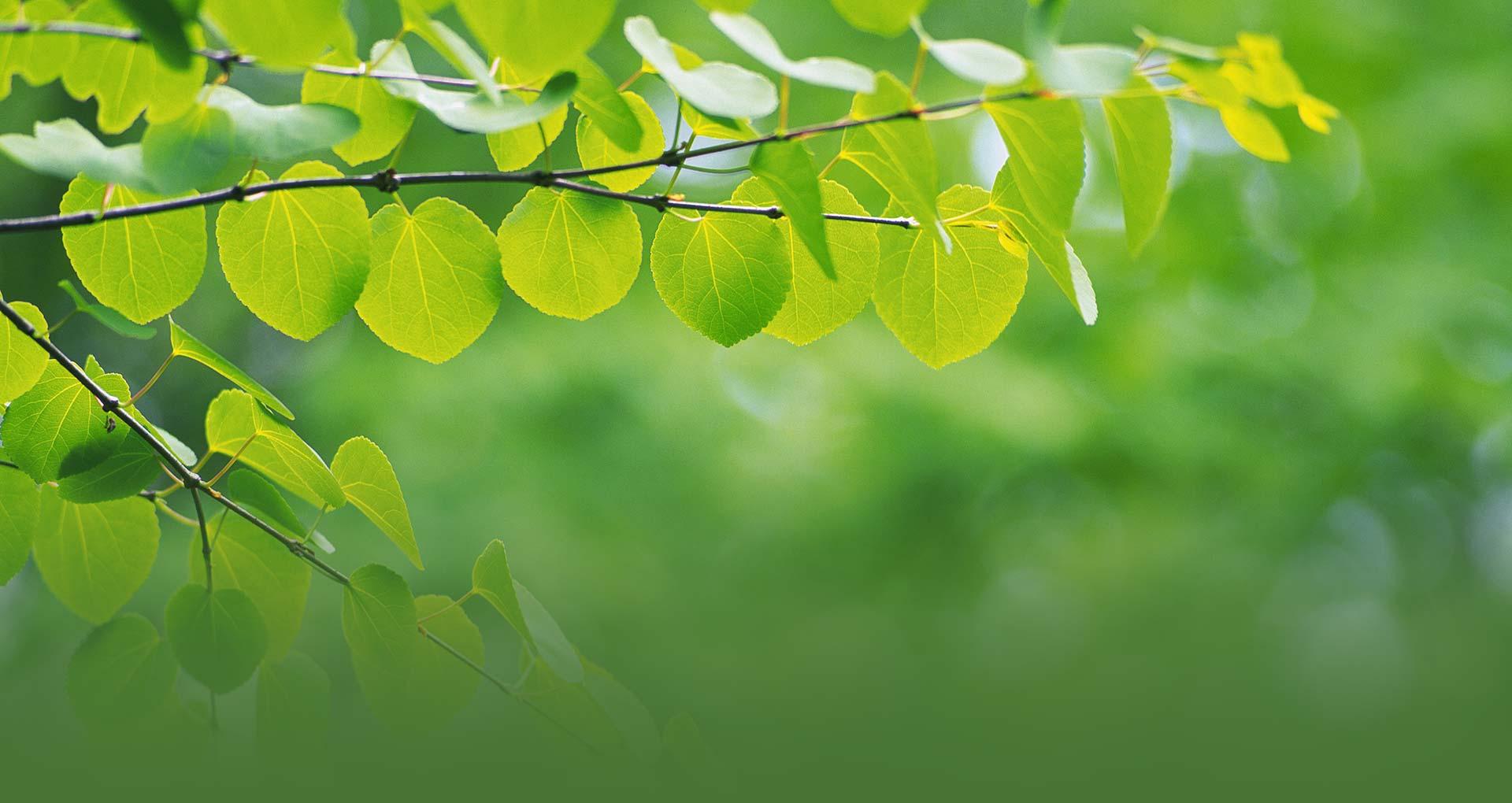 Арка из зеленых листьев скачать