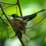 bird sitting in it's in a tree