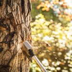 don't diy tree removal