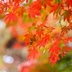 Fall Tree Care: What to Do and When to Do It