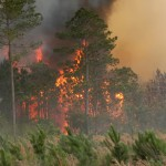 Trees burning in a forest fire