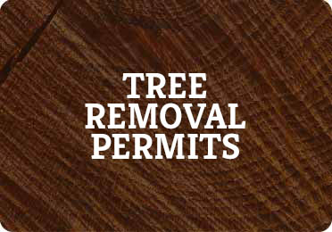 Tree Removal Permits