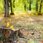 How To Remove A Tree Stump With Epsom Salt