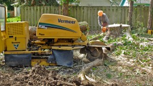 Inexpensive Tree Care Stump Grinding