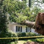 A fallen tree is seen on top of a house.