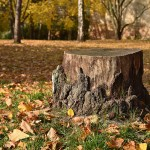 itc-tree-stump-yard