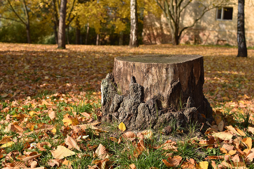 Hire A Professional To Remove Tree Stumps