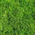 lawn_care_tips_portland