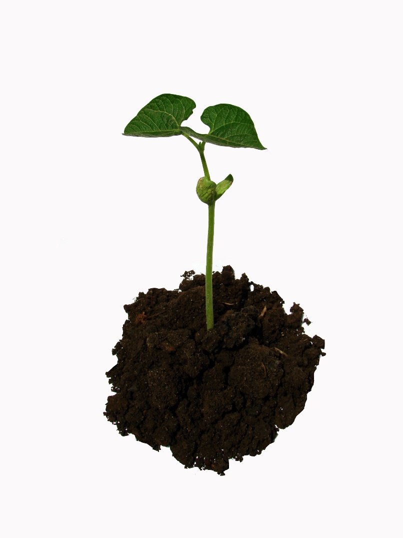 Benefits Of Organic Mulch On Trees Inexpensive Tree Care