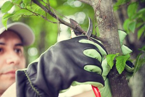 Preventative pruning and tree trimming is ideal for tree health