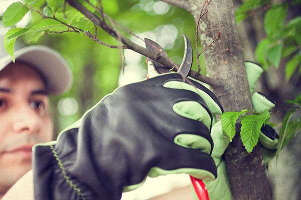 Preventative Pruning Portland, OR