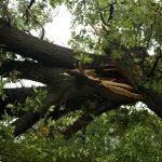 Hazardous trees are seen.
