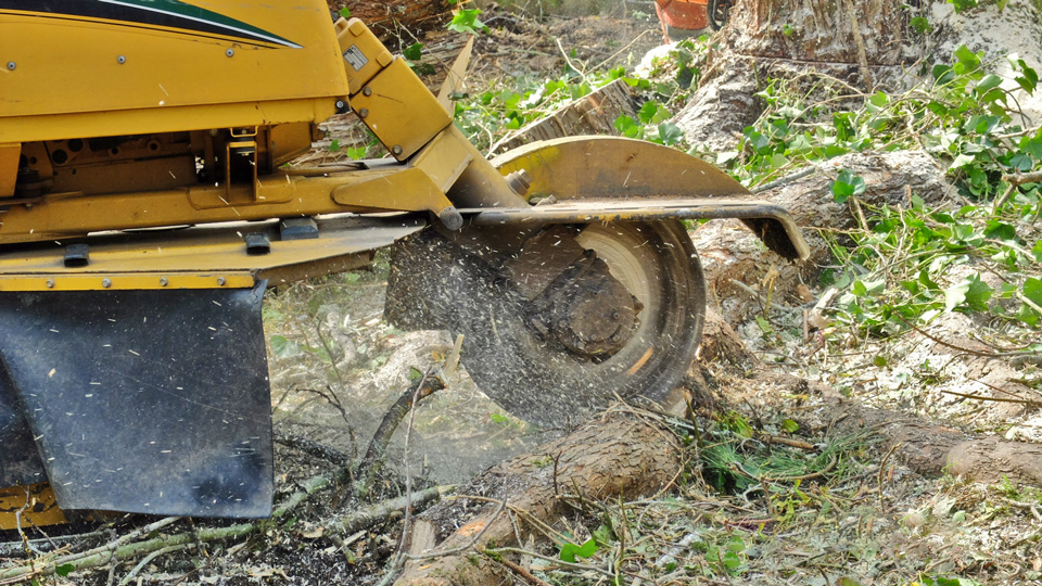 Portland OR Stump Grinding