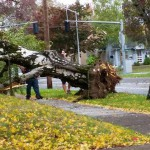a storm damaged tree falls wind storm portland
