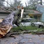 tree liability