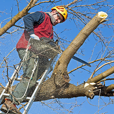 A tree cutting professional trimming a tree while standing on a ladder