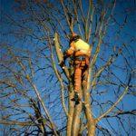 tree-pruning-portland