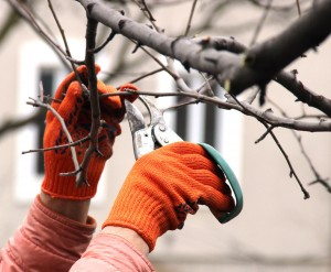 tree trimming services in Portland