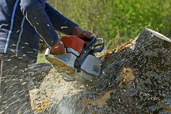 tree-removal-portland