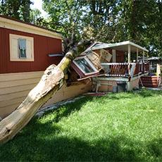 Tree Removal Vancouver WA