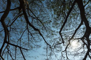 View of trees overhead with a blue sky in Gresham OR