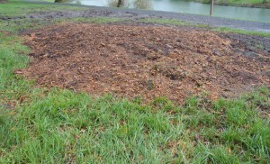 Stump grinding leave soft ground ready for planting