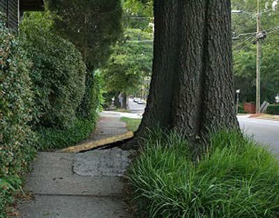 What To Do When Tree Roots Destroy The Sidewalk