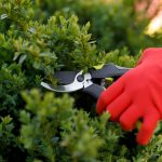 When To Trim Bushes: Inexpensive Tree Care Cuts to the Chase