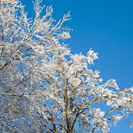 Winter Tree Care: Tips for the Season